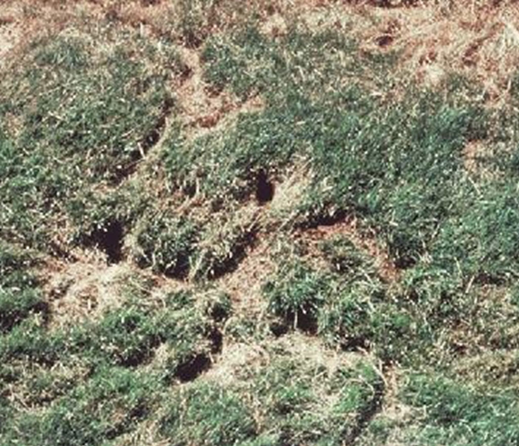 Turf Damage